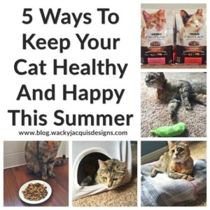 5 Ways To Keep Your Cat Healthy And Happy This Summer